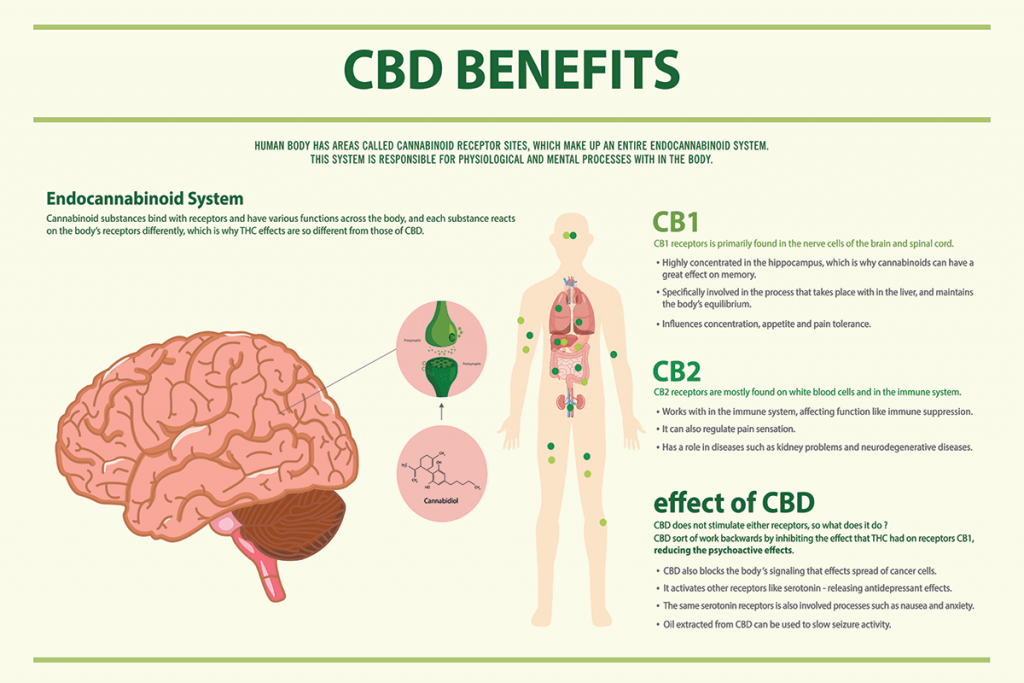 CBD Benefits infographic